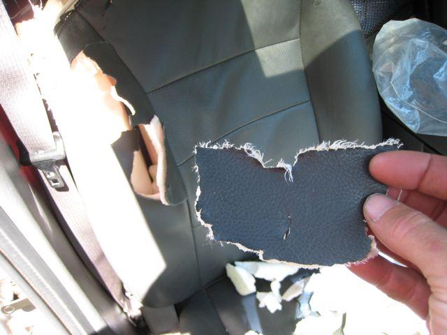 A bear ate my passenger seat!